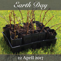 A picture of vine cuttings planted in the Domaine Divio vineyard in celebration of Earth Day and the annual event we hold in order to support the Earth Day cause.